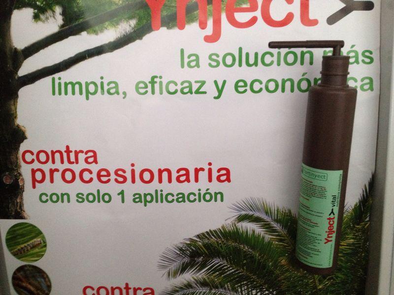 Soluci n para el picudo rojo en palmeras viveros luis moreno for Viveros en moreno