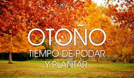 jardineria-otoño-plantas-poda