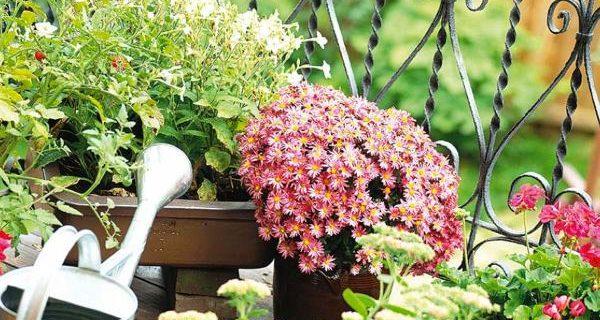 otoño jardin cuidado