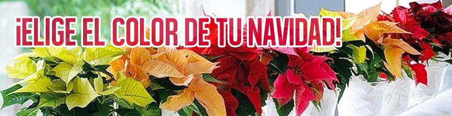 Ciclamen de invierno alegr a en tu hogar viveros luis for Viveros en moreno