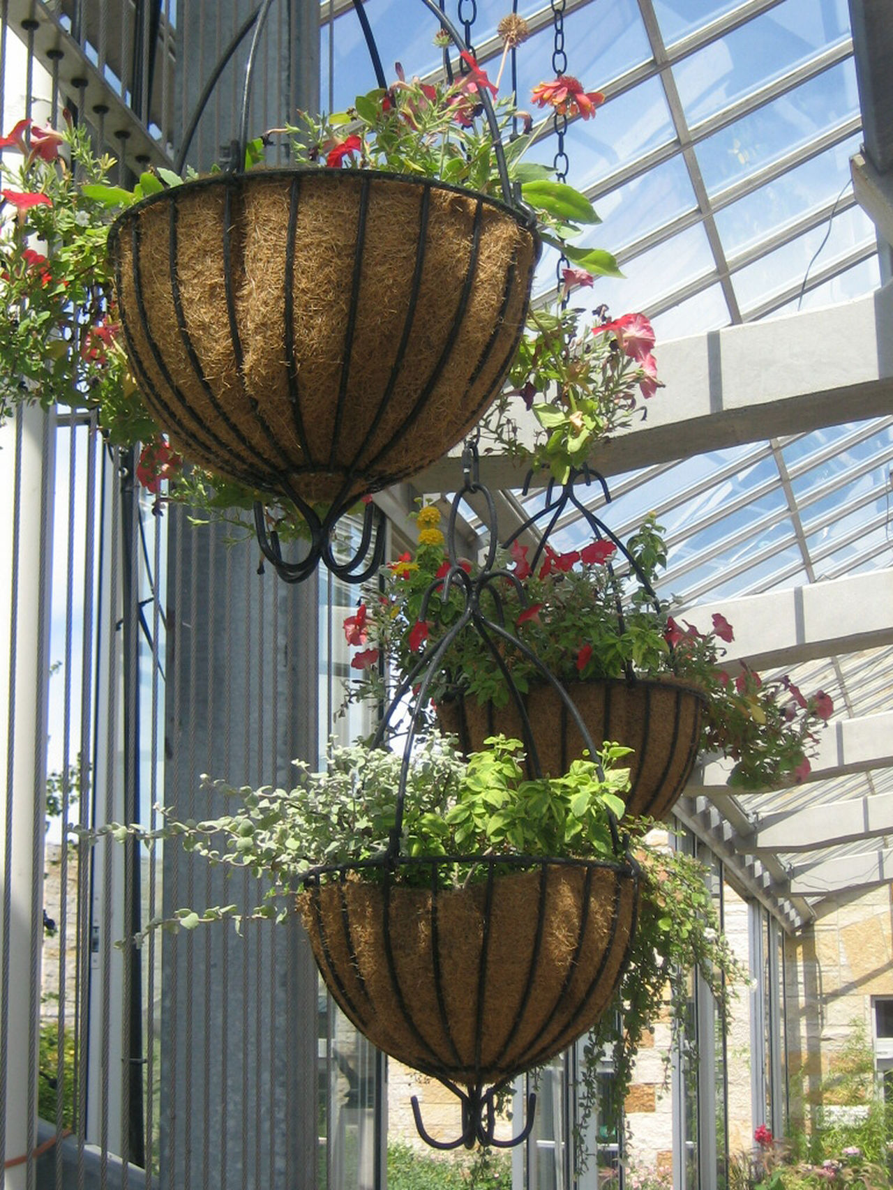 flores colgantes para balcones y terrazas viveros luis