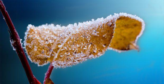 heladas-arbol-plantas-jaen