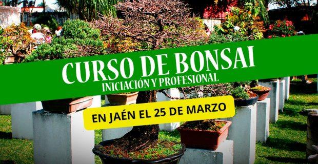Curso de Bonsais en Jaén