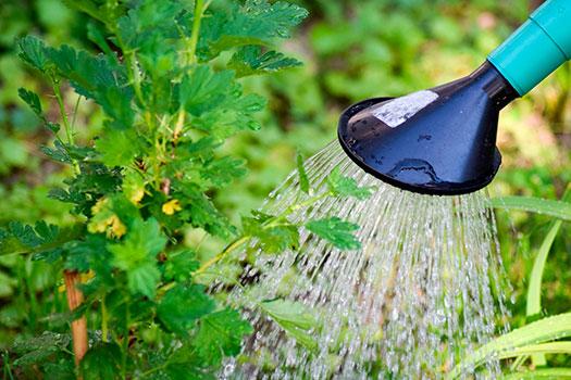 regar agua limpia