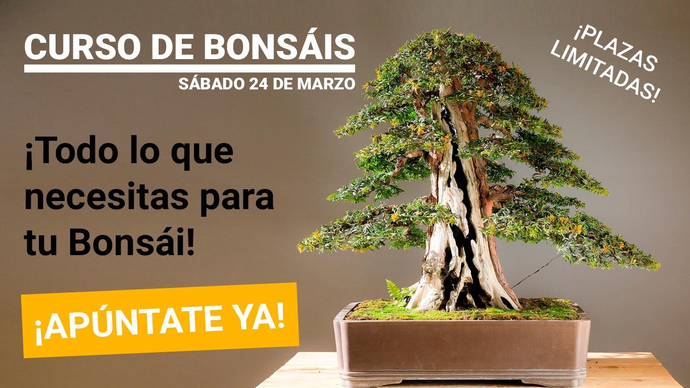 curso-de-bonsai-en-jaen
