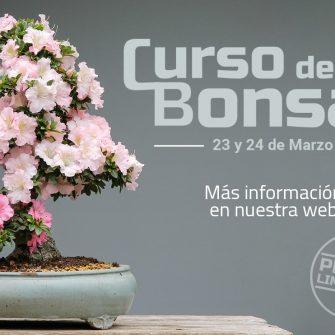 CURSO BONSAI