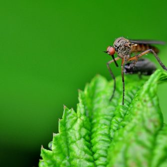insect-4276175_1920
