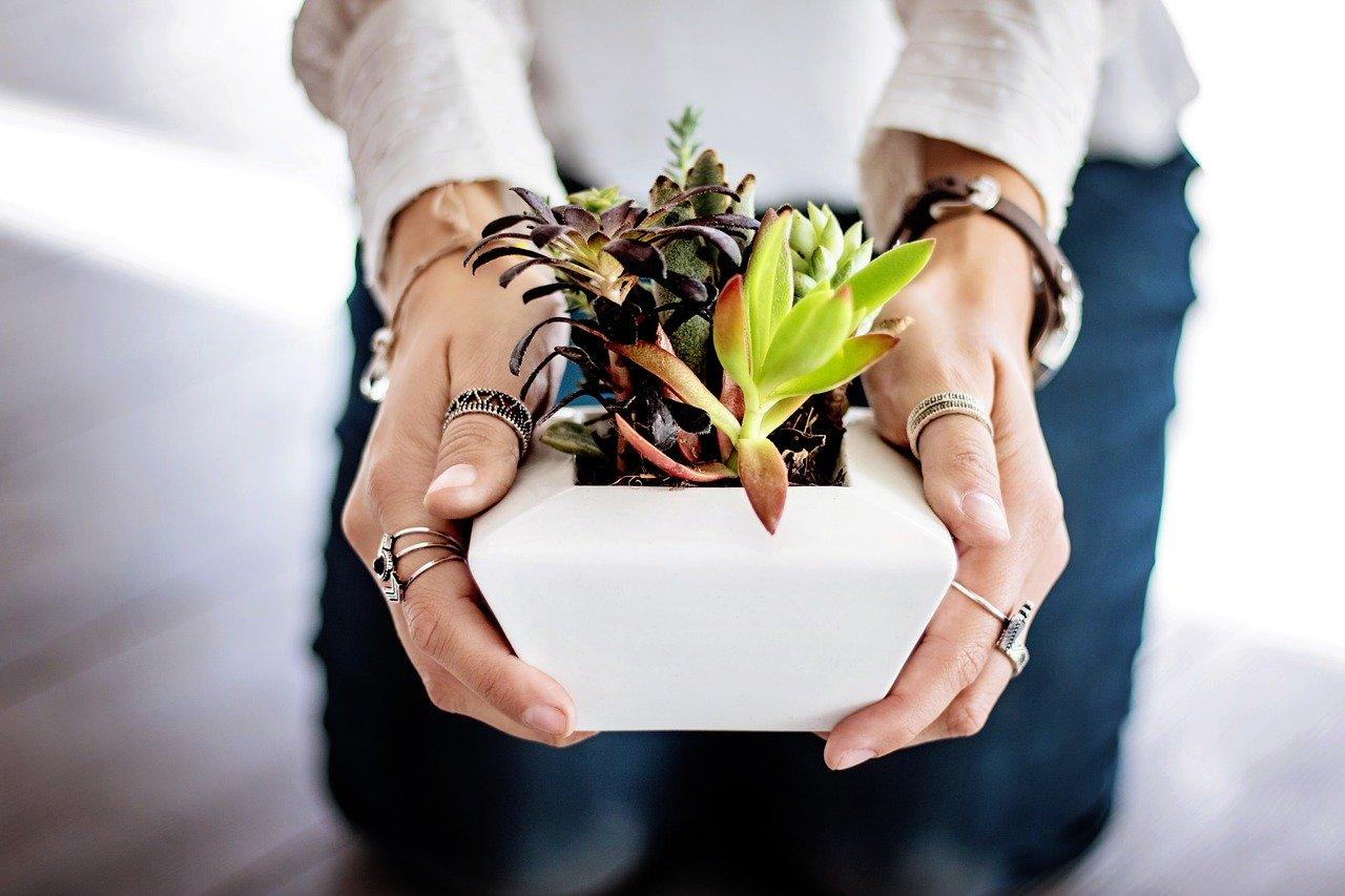 succulents-2347550_1280