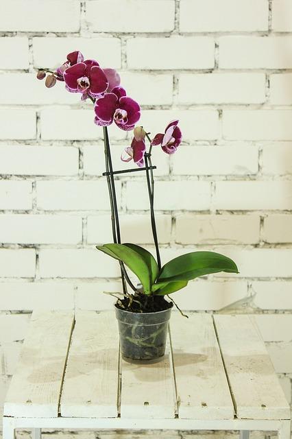 flower-2597362_640