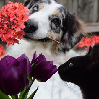 flowers-1845074_1280